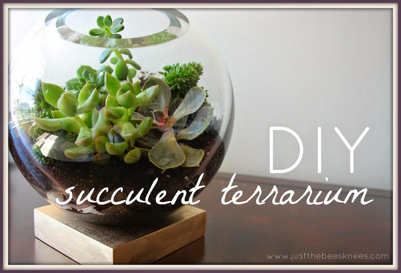 Obssession Of The Month Succulent Terrarium The Little Guru