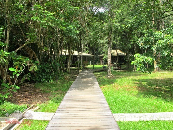 Forest Lodge at Bako NP - WireBliss
