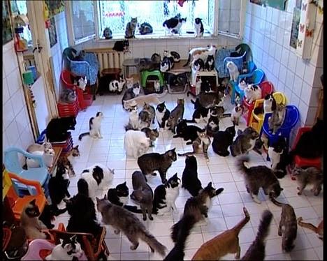muchos gatos