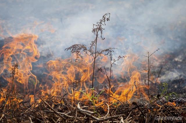 Jelang Putusan, KLHK Bekukan izin PT Bumi Mekar
