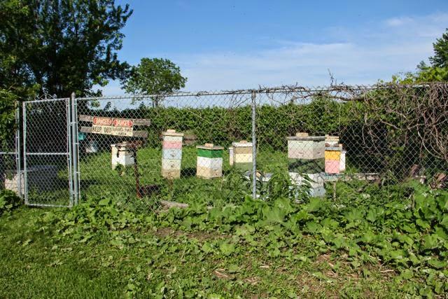 UMN beehives