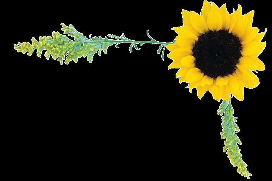 PSD+Photoshop+PSD+PSD+PSD+layout+birthday+PSD+love+PSD+PSD+flower+PSD ...