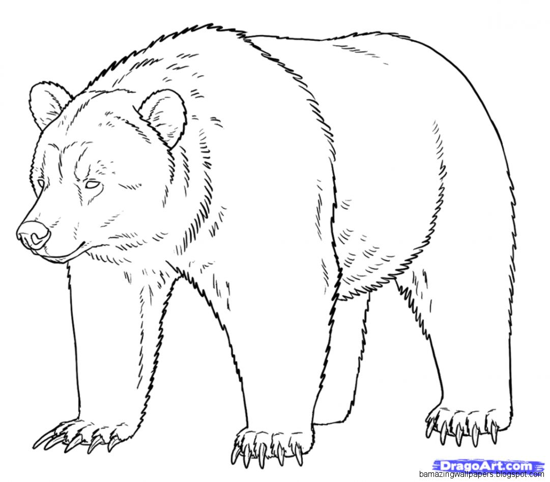 how to draw bear - photo #17
