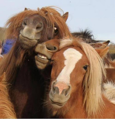 Horses posing like drunk girls and chicks at a party