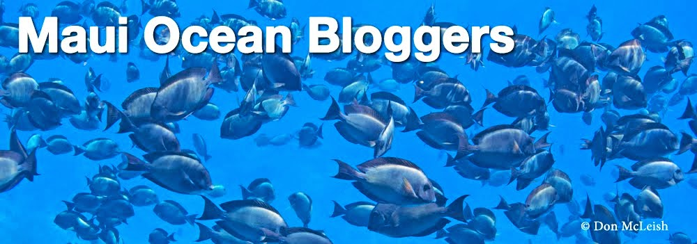 Maui Ocean Bloggers