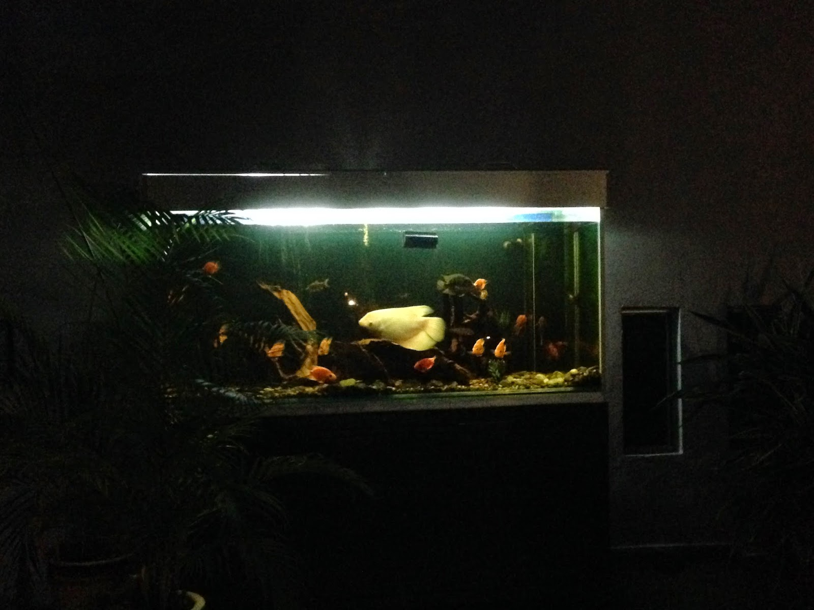 Puncak Mutiara Cafe aquarium near owner's house