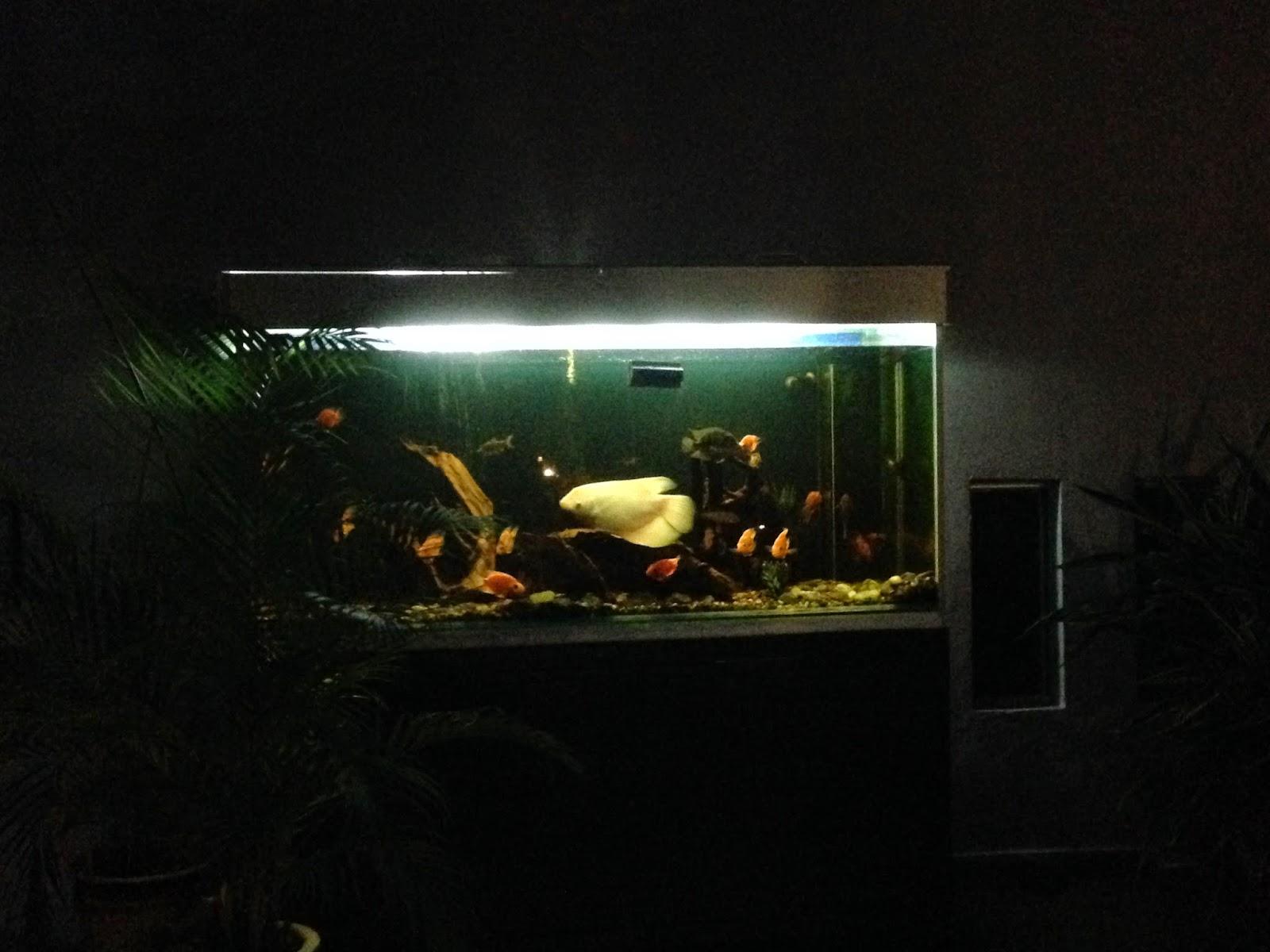 Puncak Mutiara Cafe aquarium near owner's house