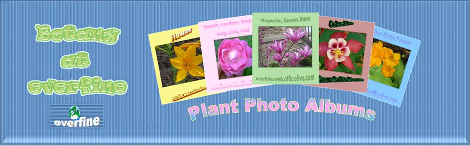 Botany at everfine