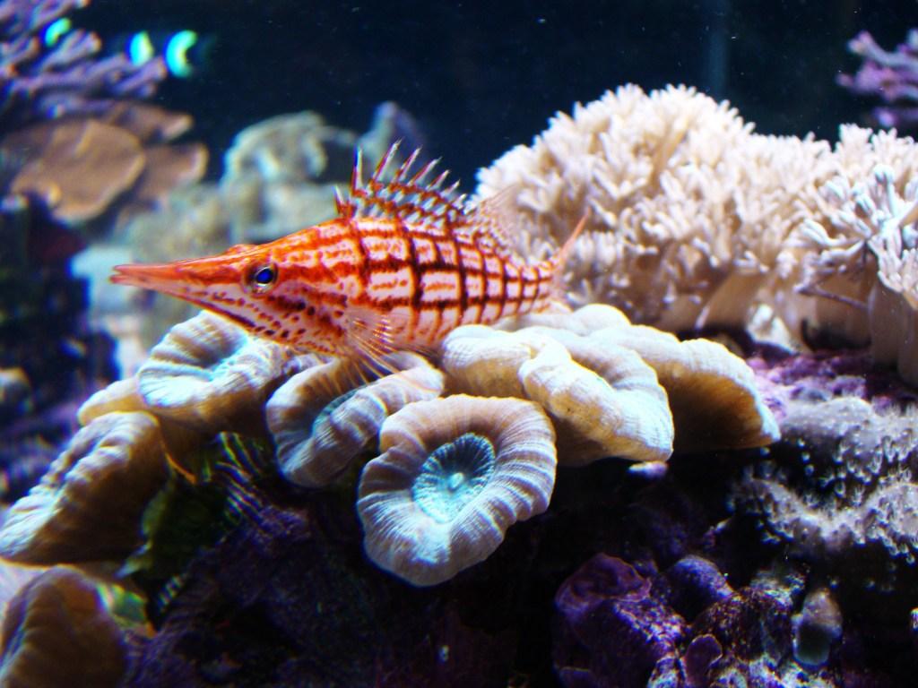 Birch Aquarium Dreams Destinations