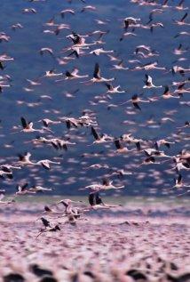 Watch The Crimson Wing: Mystery of the Flamingos Online Free Putlocker
