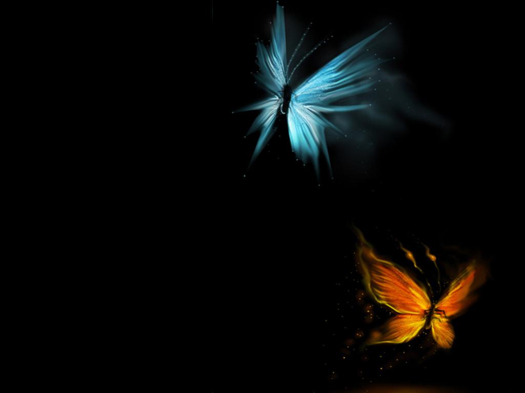 gambar binatang - download gambar kupu kupu