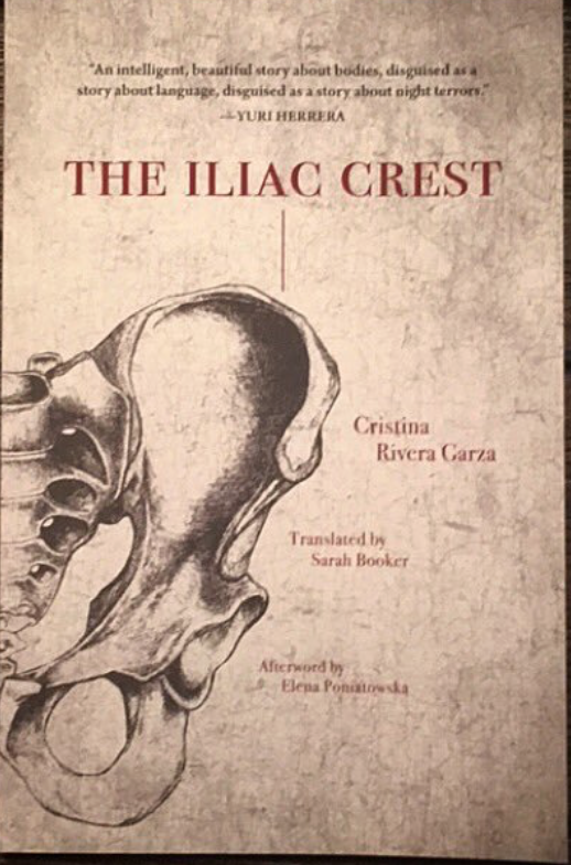 THE ILIAC CREST