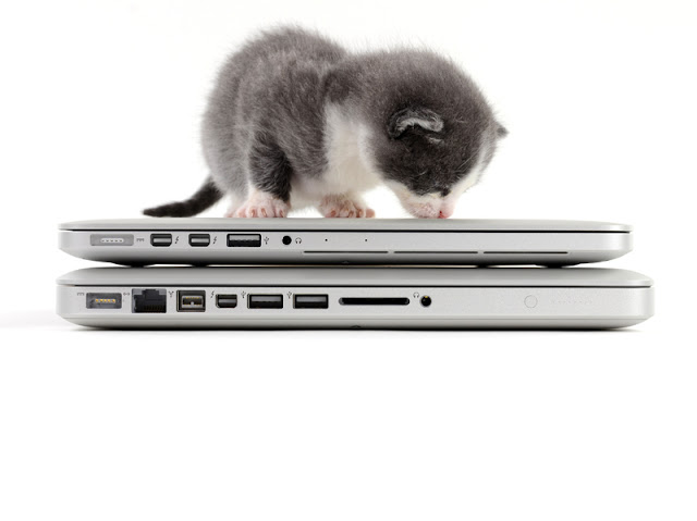 The cute cat and MacBook Pro Retina