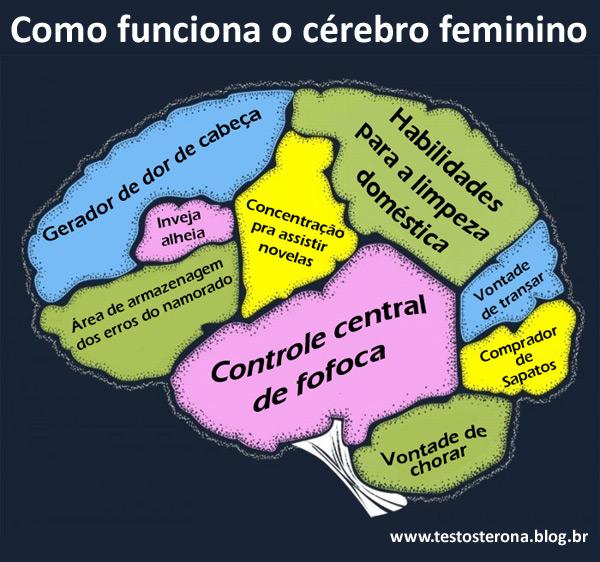 Como funciona o cérebro feminino