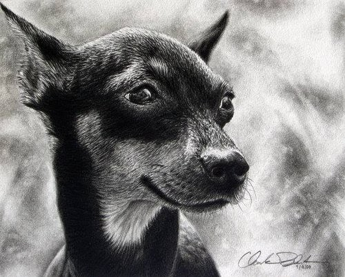 09-Charles-Black-Hyper-Realistic-Pencil-Drawings-of-Dogs-www-designstack-co