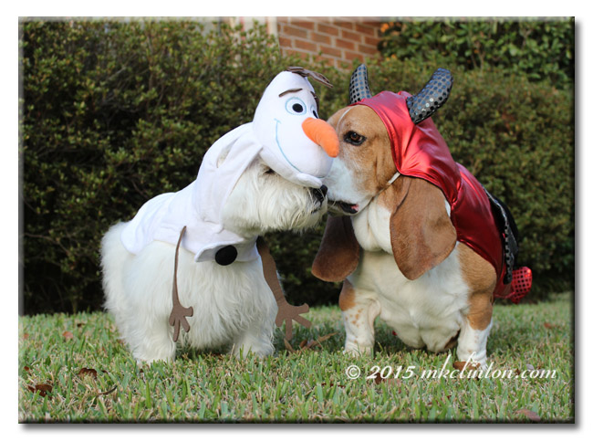 Basset devil whispering in Westie Olaf's ear