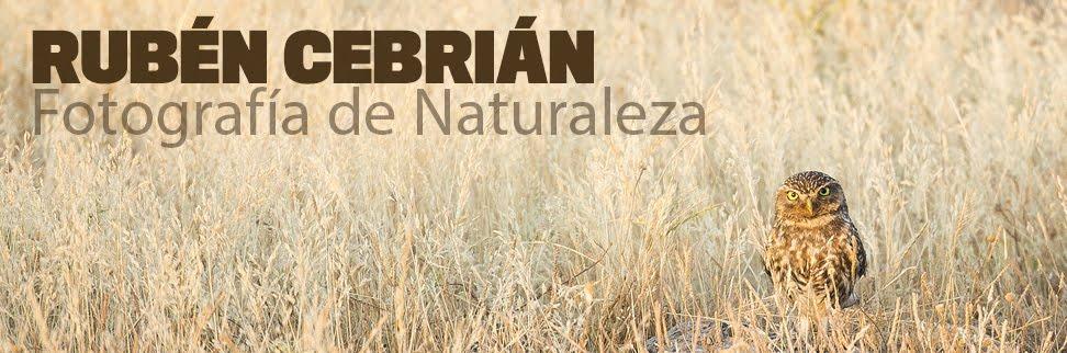 Rubén Cebrián - Fotografía de naturaleza