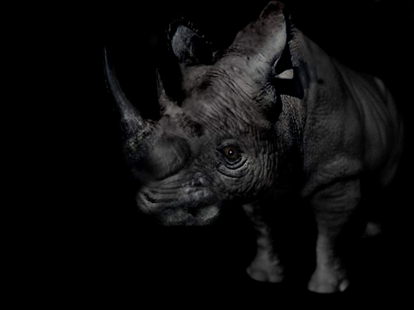 EL ANIMAL INVISIBLE: Anatomía, fotografía, movimiento. Patrick Gries.