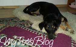 Troti's Blog