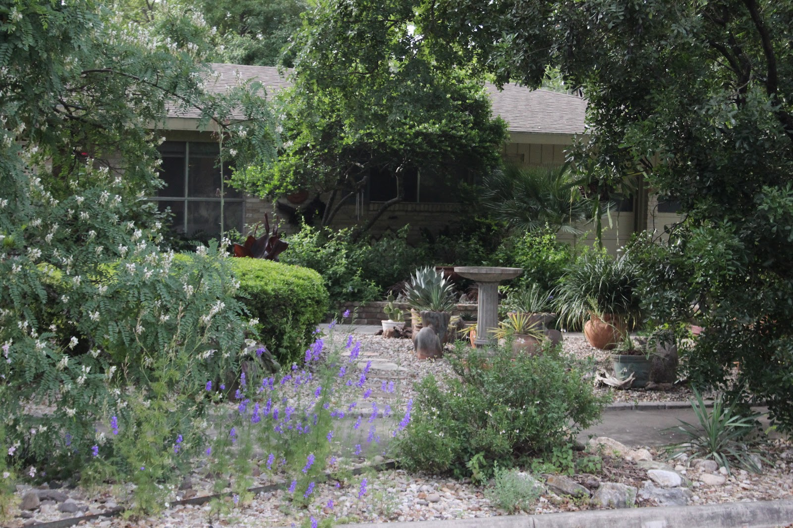 Rock Oak Deer Ragna39s Garden Part Two Xeriscape Front Yard