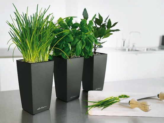Decorative plants for good interior cherish 39 s world hindi blog - Zimmerpflanzen groay ...