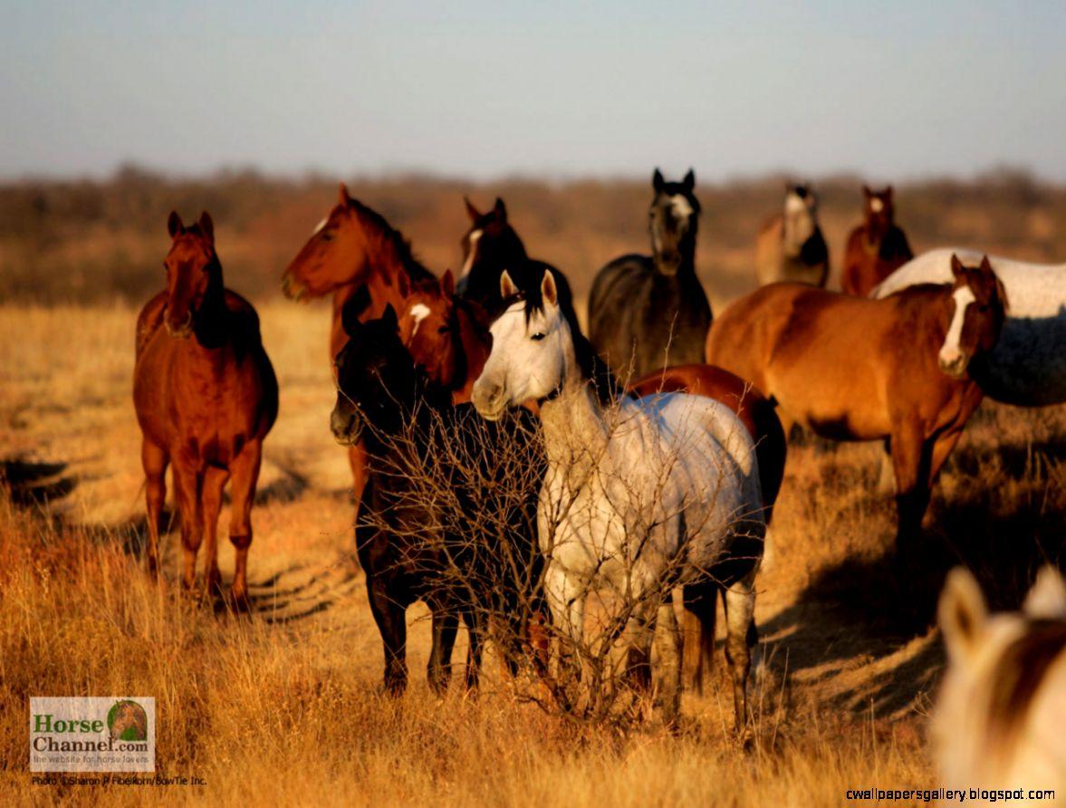 Ranch Horse Desktop Wallpapers
