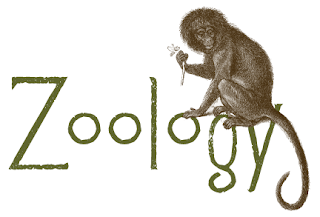 Zoology economics foundation course