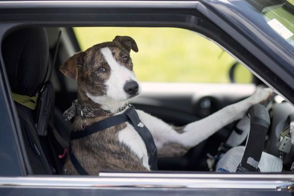 GINNY berada di tempat duduk pemandu sebuah kereta.