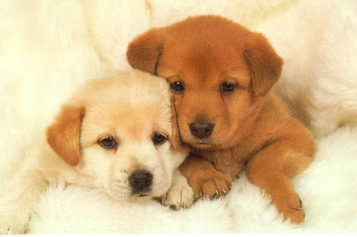 cute puppies picture