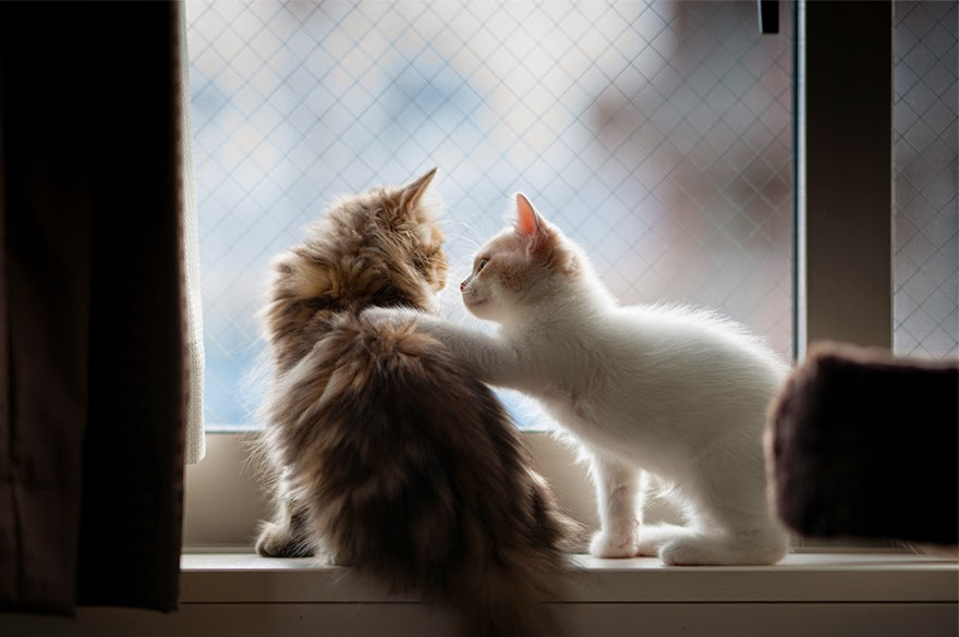 gambar kucing comel menunggu kepulangan tuannya di tingkap rumah