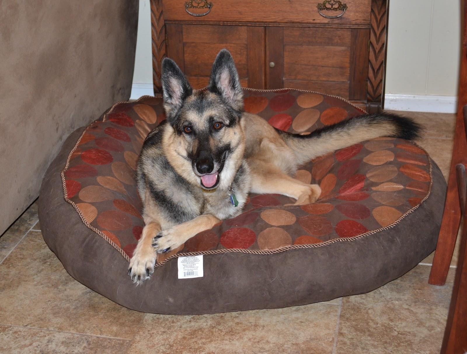 Turke The German Shepherd Dog