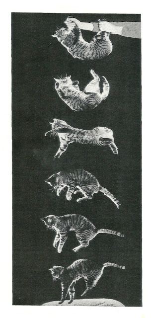 Nova Enciclopédia Ilustrada Folha / Webster
