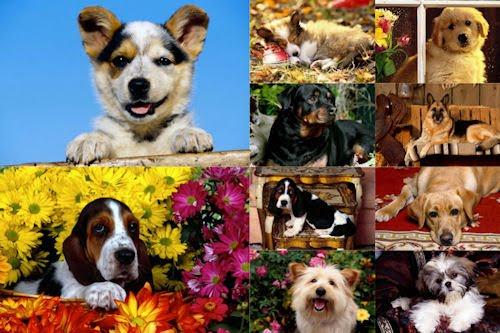 Imágenes y fotografías de perritos VII (10 wallpapers HD)