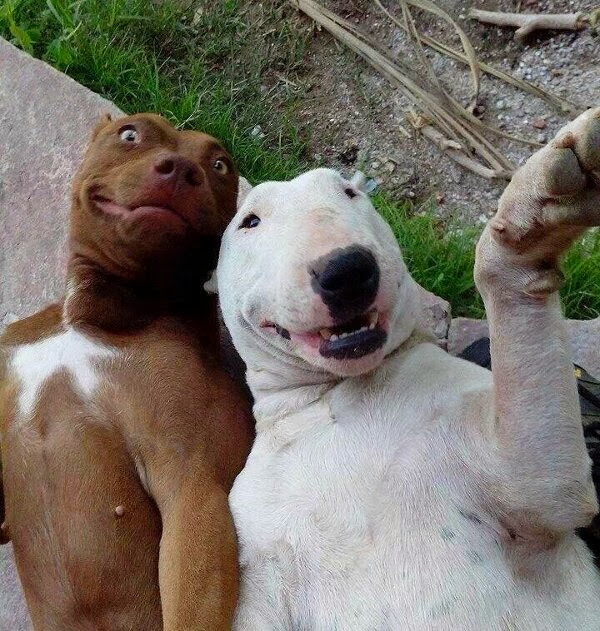 adorable dog pictures, dogs take a selfie