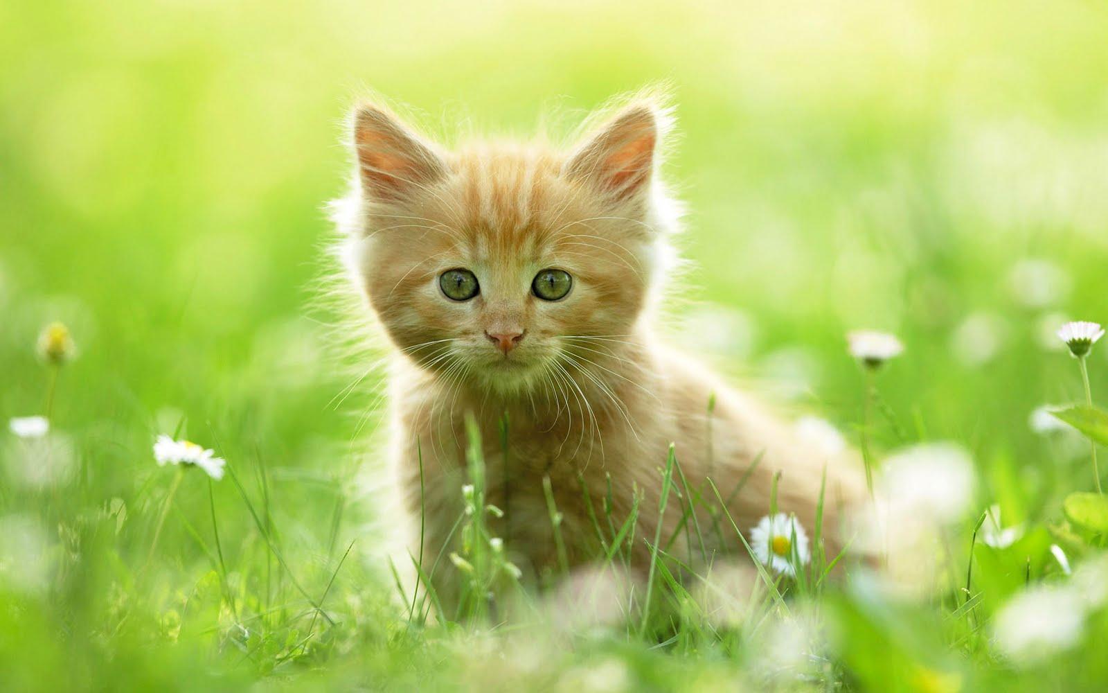 adopt a pet  Urticária em Gatos Sintomas e Tratamento