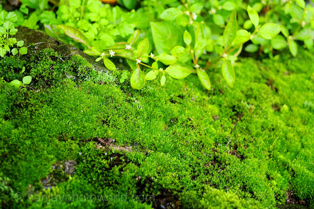 algae grass