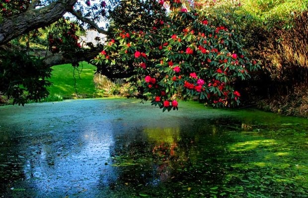 World's most beautiful gardens - Lost Gardens of Heligan, United Kingdom