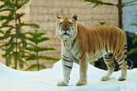 Inilah Kebun Binatang Terbaik Di Asia, Salah Satunya Batu Secret Zoo