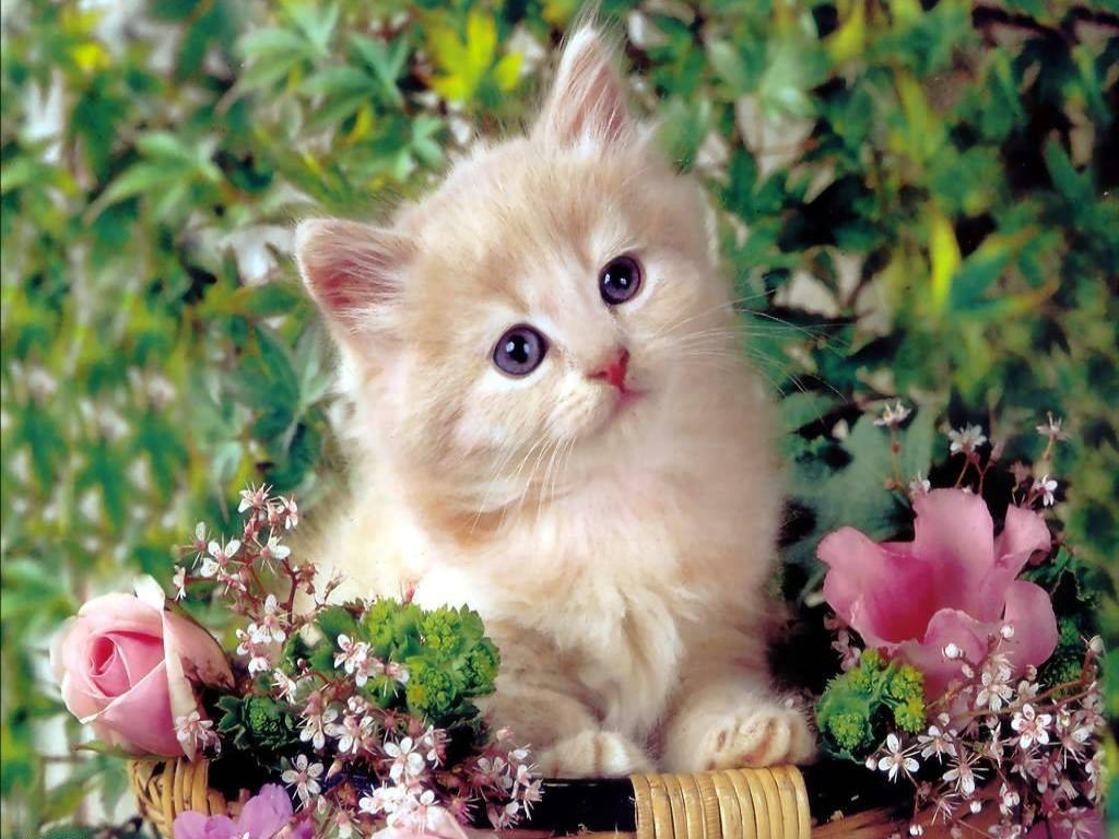 Wallpaper Gallery: Cat & Kittens Wallpaper -4