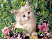 Below you can choose your favorite Cute Cat Wallpapers HD to refresh your . cute cat wallpapers hd