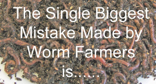 The single biggest mistake made by worm farmers