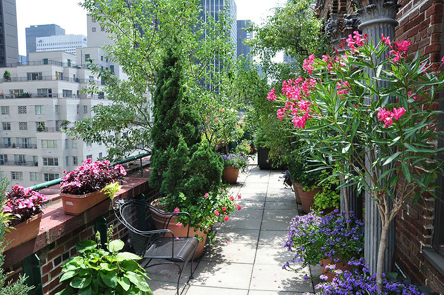 Un jardin en la azotea taringa - Rooftop terrace beautiful and fresh rooftop decorating ideas ...