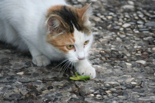 Cat Catching A Bug
