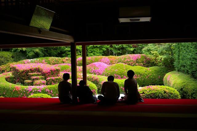 topiaria em azaleia no jardim japonês