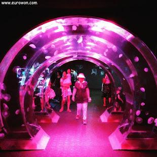 Túnel de medusas