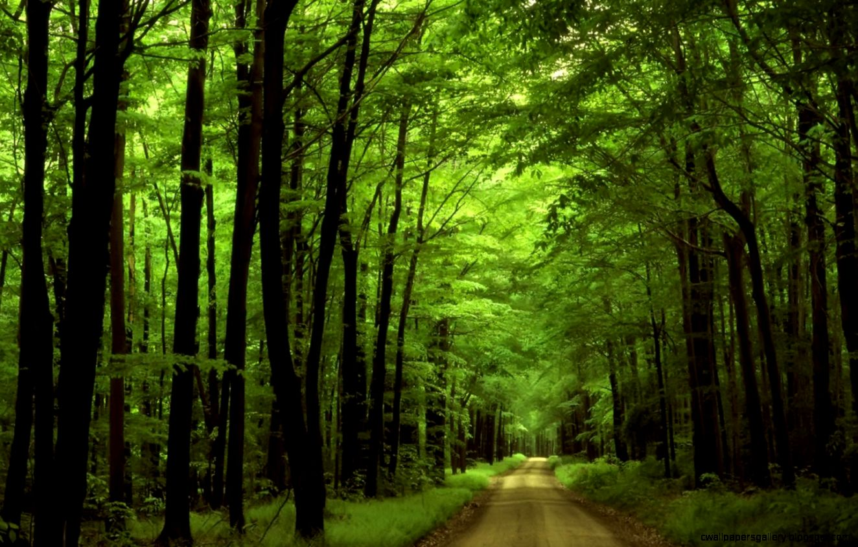 Forest Wallpaper Widescreen   wallpaper