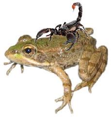 La rana y el escorpión