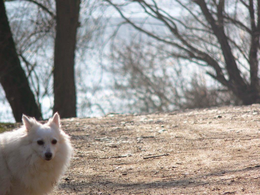 Naturpark Rheinland Hunderunde Köln Sonne Winter Spazierengehen Wandern See Migo Hund Spitz