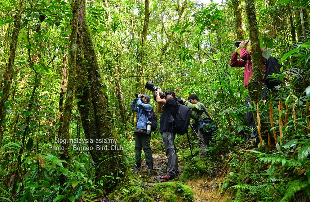 Birdwatching in the rainforest of Borneo