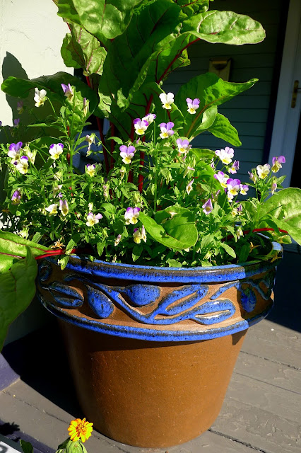 Edible Landscaping: Swiss Chard and Violas in container